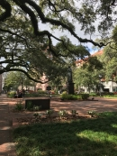One of the many beautiful squares scattered throughout Savannah. Such a pleasure to walk around this city!